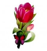 Цветок. Тюльпан с бабочкой.
